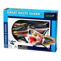Great White Shark Anatomy kit for kids