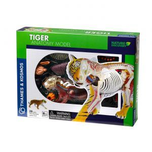 Nature Discovery Tiger Anatomy Model